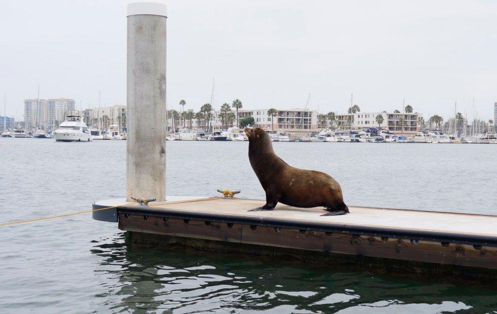 Valentine Dayz seal